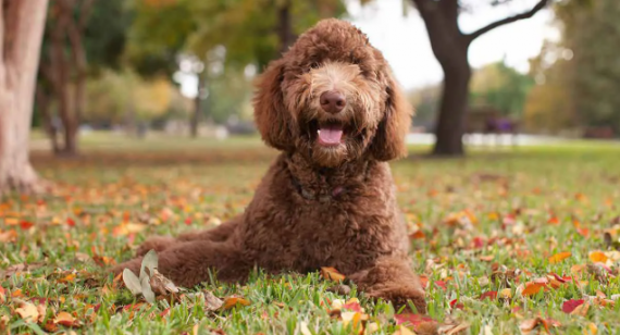 CBD For Dogs: Buying Guide And Treatment Tips
